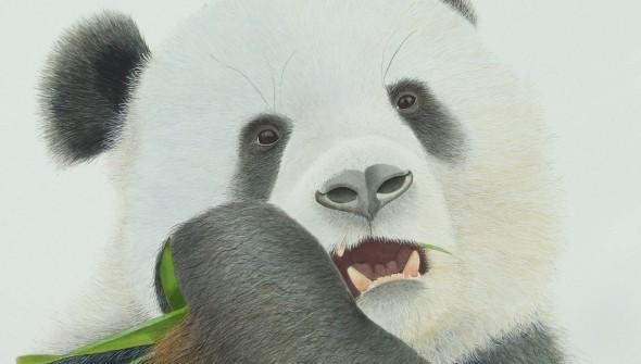 Bamboo for Breakfast - Wildlife Watercolour